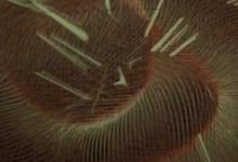 Fresque Interactive // Colod'Art 2012